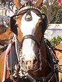Budweiser Clydesdale Horse.jpg