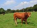 Bull, Odiham - geograph.org.uk - 956253.jpg