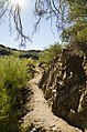 Butcher Jones Trail, Tonto National Forest, Fort McDowell, AZ 85264, USA - panoramio (35).jpg