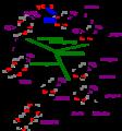 Calvinzyklus.png