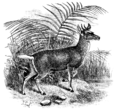 Cambridge Natural History Mammalia Fig 154.png