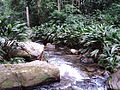 Camino a Chorreron Estado Aragua.jpg
