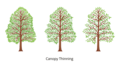 Canopy-thinning3fullcolor650x350.png