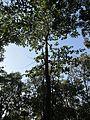 Canopy view.jpg