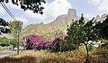 Cape Verde Santiago São Jorge dos Órgãos Bougainvillea 2011.jpg