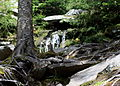 Cardigan State Park, 30 May 2009, no. 3.jpg