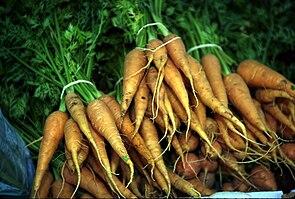 Wurzel der Karotte (Daucus carota)