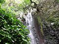 Cascada entre hojas - panoramio.jpg