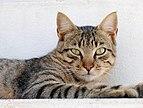 Cat August 2010-2.jpg