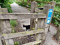 Cat on Guard - geograph.org.uk - 1337402.jpg