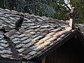 Cat with Cross on Rooftop - Courtyard of Sveti Spas Orthodox Church - Old Town (Carsija) - Skopje - Macedonia.jpg
