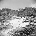 Ceder bos in de Qadisha vallei, Bestanddeelnr 255-6467.jpg