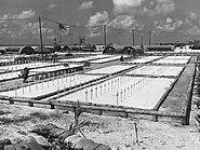 Cemetry at Tarawa