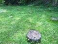 Cetatea de la Costesti pietre sacre ale dacilor.jpg