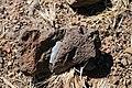 Chalcedony In Situ (3516306017).jpg