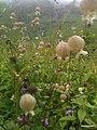 Chamoli, Uttarakhand, India - panoramio (4).jpg