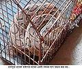Chandrabara Snake-pic.jpg