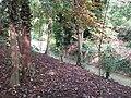 Channel feeding The Tarn, Mottingham - geograph.org.uk - 2415551.jpg