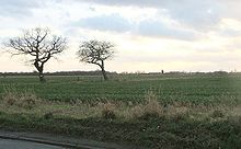 Flat field with two trees in the mid-foreground