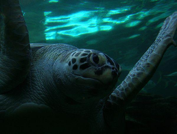 Oceanarium Bournemouth IMAGES VIDEOS