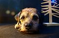 Christmas border terrier picture.jpg