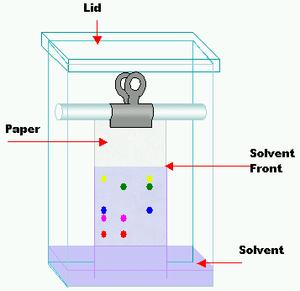 Paper chromatography - Chromatography jar