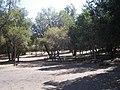 Cipreses (Ranchillo). - panoramio (2).jpg