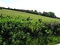 Claggan Townland - geograph.org.uk - 1341045.jpg