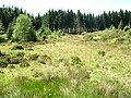 Clearing in Kielder Forest - geograph.org.uk - 204576.jpg
