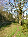 Clevance Farm old lane.JPG