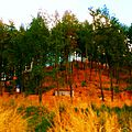 Colina de pinos.jpg