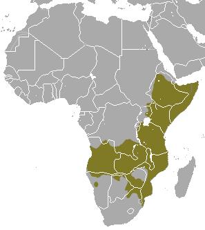 Common Dwarf Mongoose area