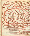 Contributiones ad algologiam et fungologiam (1875.) (20498458849).jpg