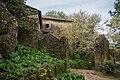 Convento dos Capuchos. Arbolado.jpg