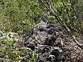 Coral Stone - panoramio.jpg
