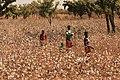 Coton - route pour Nazinga - Burkina Faso.jpg