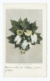 Cotton Blossoms, South (NYPL b12647398-63135).tiff