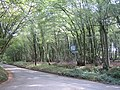 Crouch Green Wood - geograph.org.uk - 562448.jpg