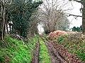 Cumbers Lane, approaching Cumbers Farm - geograph.org.uk - 708656.jpg