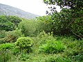 Damp woodland, Adrigole - geograph.org.uk - 263747.jpg