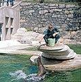 De Californiska sjölejonen matas inför publik på Skansen.jpg