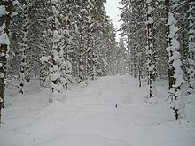 Deep Snow in the Forest - geograph.org.uk - 1169992.jpg