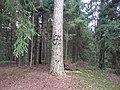 Degučių sen., Lithuania - panoramio (202).jpg
