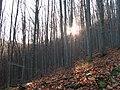 Diósjenő, 2643 Hungary - panoramio (11).jpg