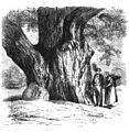 Die Gartenlaube (1859) b 624 2.jpg