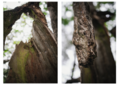 Diptych of Tree Logs.png