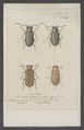 Diversen - Print - Iconographia Zoologica - Special Collections University of Amsterdam - UBAINV0274 026 08 0002.tif