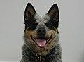 Dixie the dog.jpg