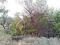 Dnipropetrovs'kyi district, Dnipropetrovsk Oblast, Ukraine - panoramio (12).jpg