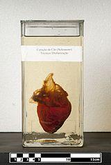 Dog heart (Schnauzer).jpg